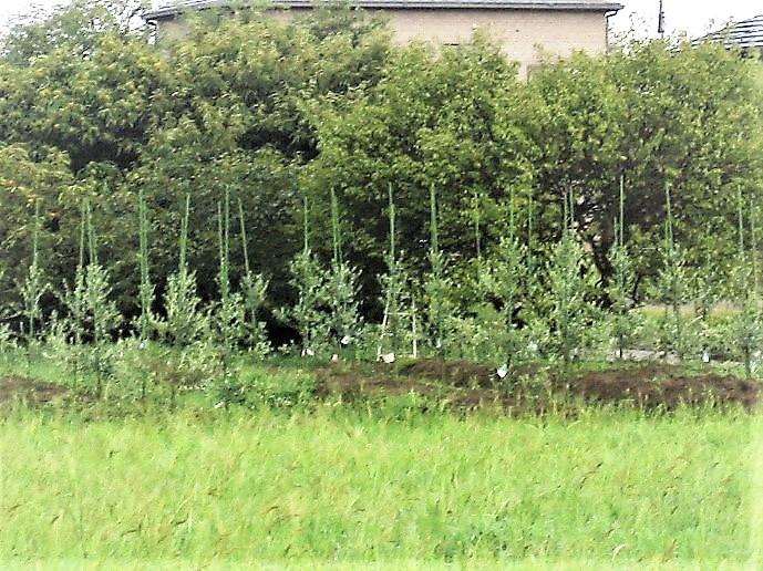 2020年3月 苗木80本を定植